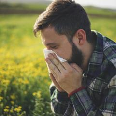 Pollen detectives work to predict asthma and hay fever